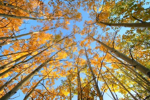 Looking up through autumnal trees to a blue sky Lift Your Head Up
