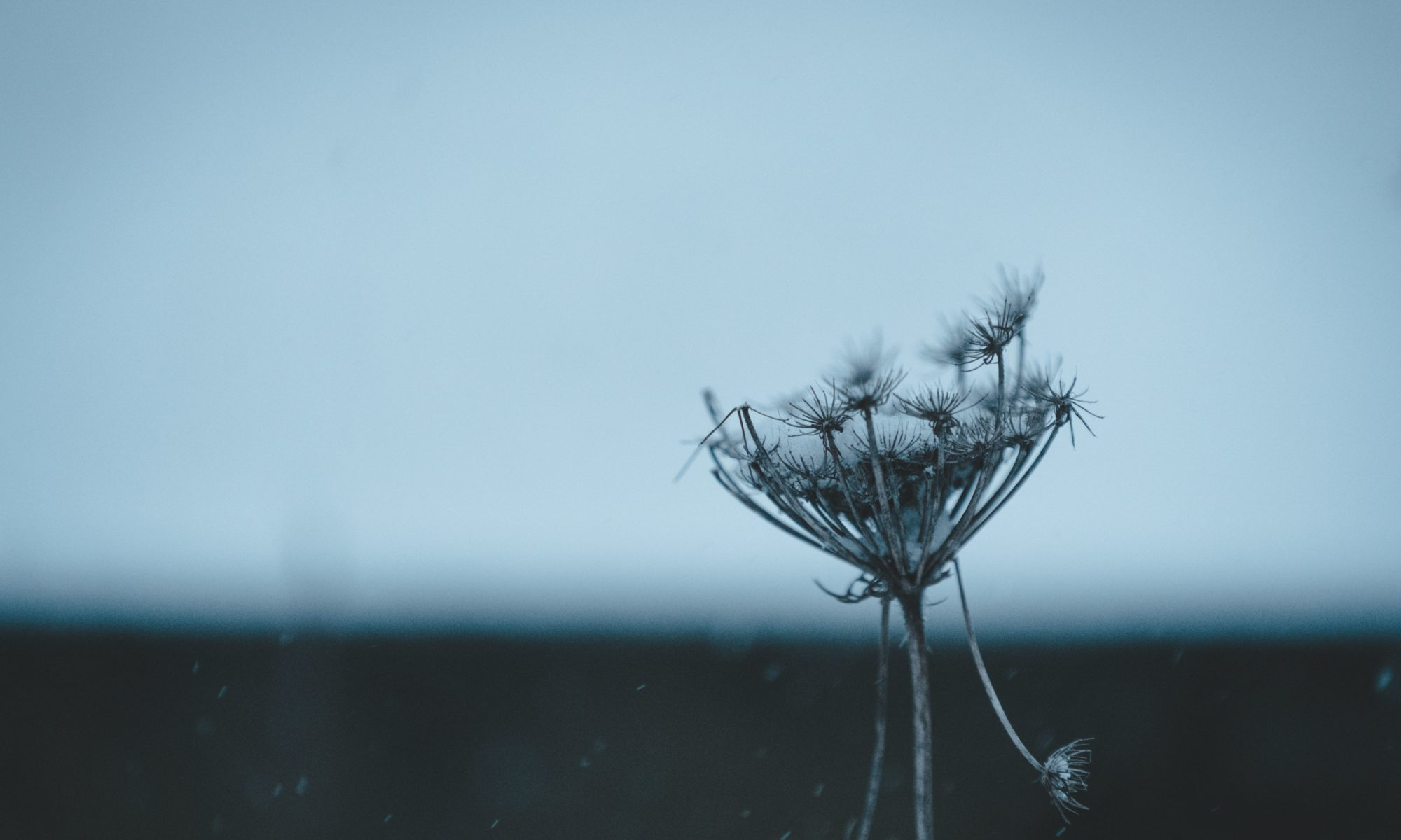 cow parsley looking weather battered to illustrate blog How resilient are you